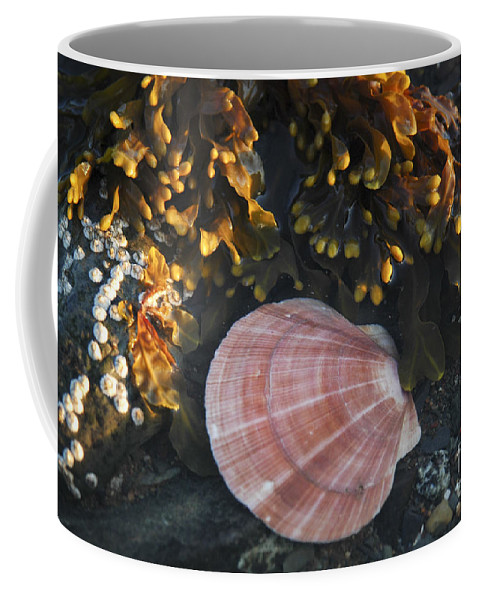 Low Tide Coffee Mug featuring the photograph Seashore by Alana Ranney