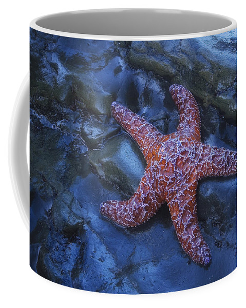 Starfish Coffee Mug featuring the photograph Seastar by Peter Coskun