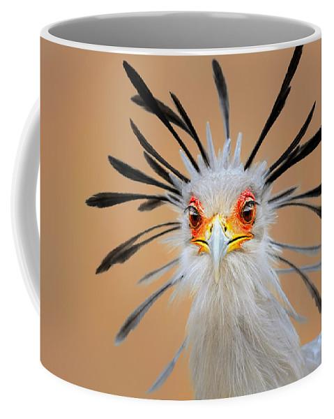 Bird Coffee Mug featuring the photograph Secretary bird portrait close-up head shot by Johan Swanepoel