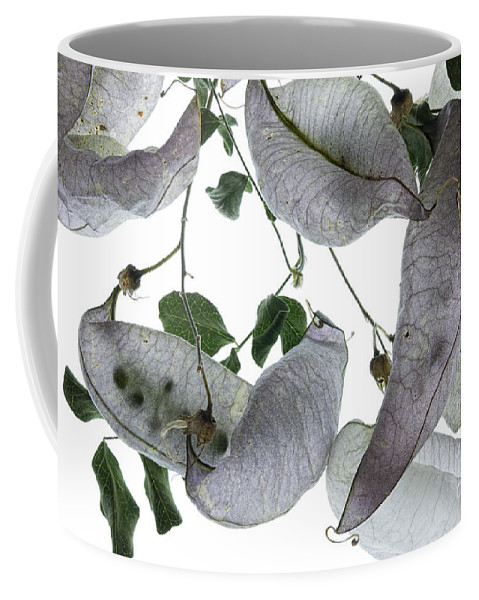 Bladder Senna Seed Pod Coffee Mug featuring the photograph Seed Pods by Ann Garrett