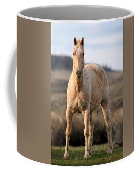 Horse Coffee Mug featuring the photograph Seeing Eye-to-eye by Liz Mackney
