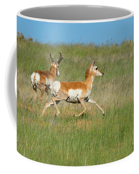 Pronghorn Antelope Coffee Mug featuring the photograph Separate Ways by Jim Garrison