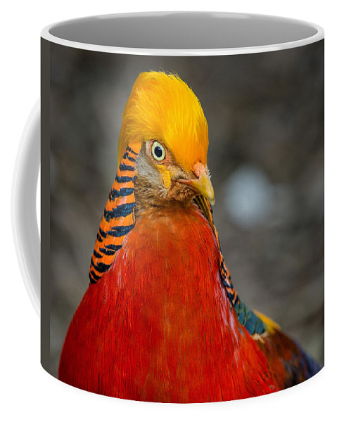 Birds Coffee Mug featuring the photograph Serious Bird by Greg Nyquist