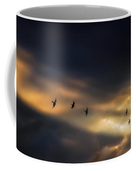 Birds Coffee Mug featuring the photograph Seven Bird Vision by Bob Orsillo