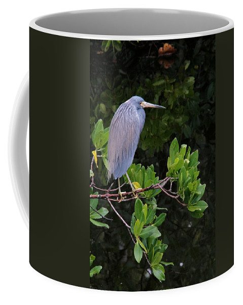 Blue Coffee Mug featuring the photograph Shades Of Blue And Green by Doris Potter