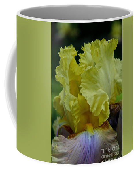 Flower Coffee Mug featuring the photograph Shades Of Iris by Susan Herber