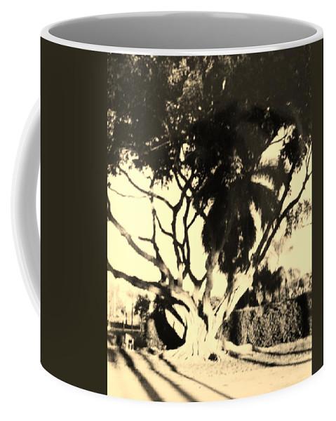 Trees Coffee Mug featuring the photograph Shadow Tree by Rob Hans