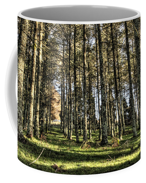 Larch Forest Coffee Mug featuring the photograph Shadows Of The Larch Forest Sunset No2 by Weston Westmoreland