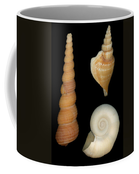 Savad Coffee Mug featuring the photograph Shell - Conchology - Shells by Mike Savad