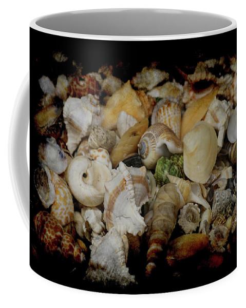 Shells Coffee Mug featuring the photograph Shells by Ernie Echols