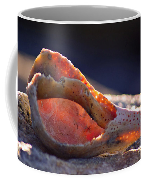 Conch Coffee Mug featuring the photograph Shellwork by Joe Geraci