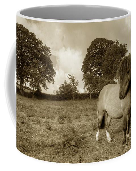Shetland Coffee Mug featuring the photograph Shetland Pony by Rob Hawkins