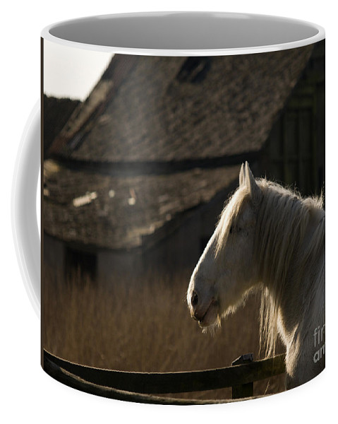 Horse Coffee Mug featuring the photograph Shire Horse by Angel Ciesniarska