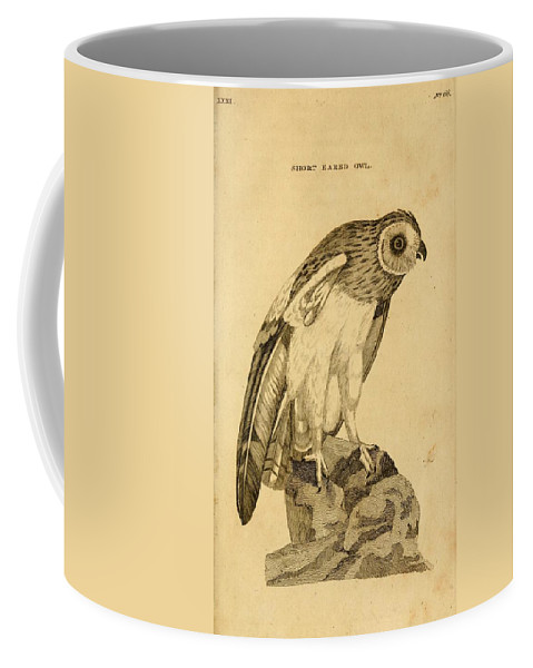 Short-eared Coffee Mug featuring the painting Short-eared Owl by Philip Ralley