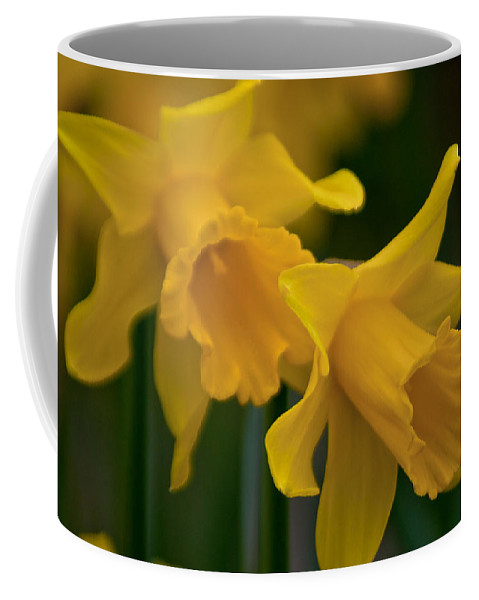 Daffodils Coffee Mug featuring the photograph Shout Out Of Spring by Tikvah's Hope
