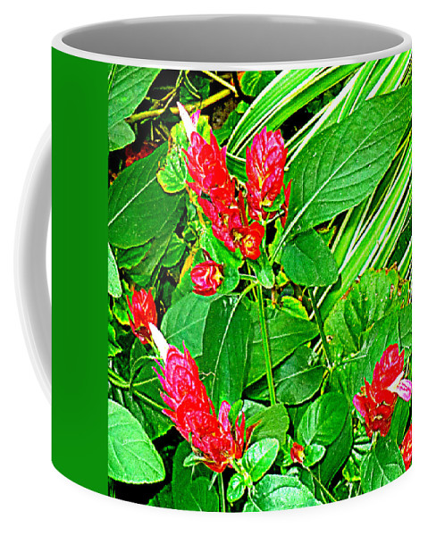 Colorful Coffee Mug featuring the photograph Shrimp Bloom by Victoria Beasley