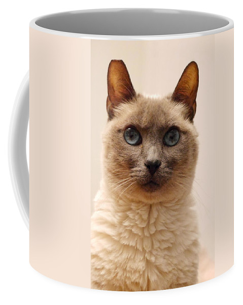 Siamese Cat Coffee Mug featuring the photograph Siamese Cat by Richard Cheski