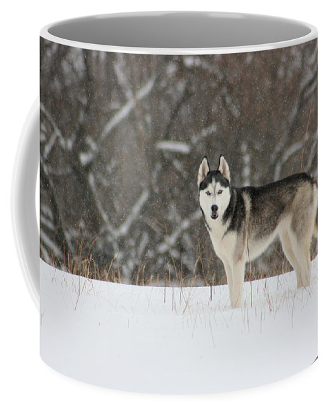 Landscape Coffee Mug featuring the photograph I've Been Spotted by David Dunham