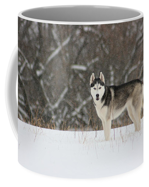 Landscape Coffee Mug featuring the photograph Siberian Husky 20 by David Dunham