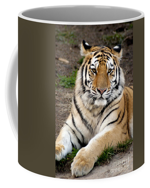 Siberian Tiger Coffee Mug featuring the photograph Siberian Tiger by Anthony Totah
