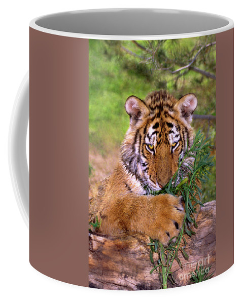 Siberian Tiger Coffee Mug featuring the photograph Siberian Tiger Cub Endangered Species Wildlife Rescue by Dave Welling