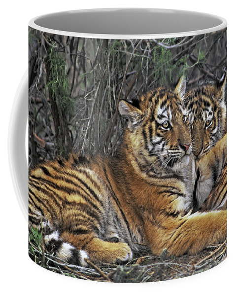 Siberian Tiger Coffee Mug featuring the photograph Siberian Tiger Cubs Endangered Species Wildlife Rescue by Dave Welling