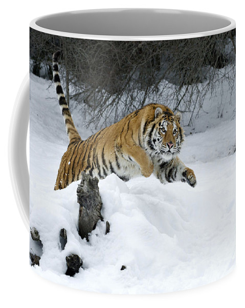 Tiger Coffee Mug featuring the photograph Siberian Tiger by Sandra Bronstein