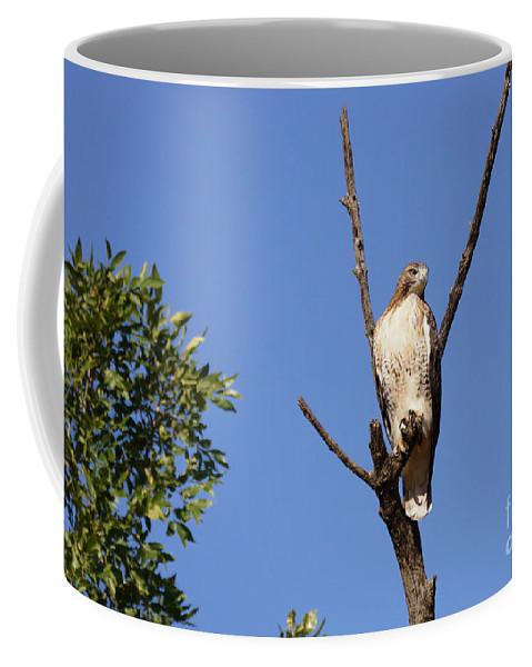 Raptor Coffee Mug featuring the photograph Silent Watch by Lori Tordsen
