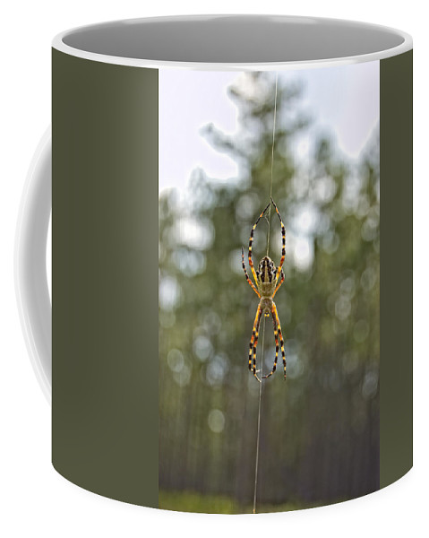 Argiope Argentata Coffee Mug featuring the photograph Silver Argiope by Rich Leighton