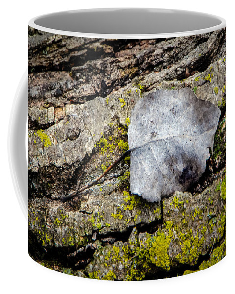 Silver Coffee Mug featuring the photograph Silver Leaf by Grace Grogan
