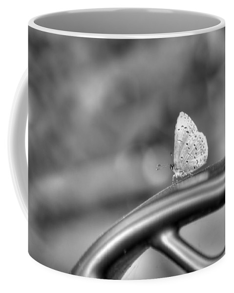 Insect Coffee Mug featuring the photograph Silver White Butterfly by Diego Re