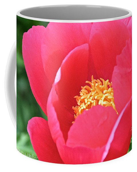 Flower Coffee Mug featuring the photograph Simple Peony by Susan Herber