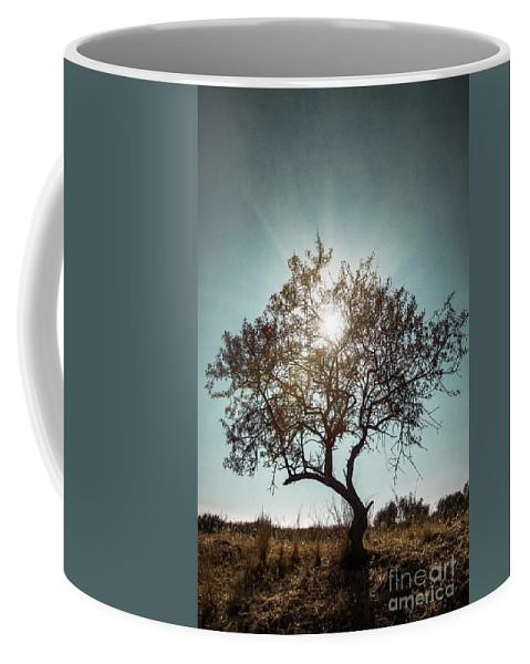 Dark Coffee Mug featuring the photograph Single Tree by Carlos Caetano
