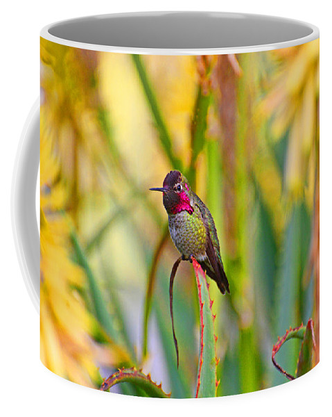 Hummer Coffee Mug featuring the photograph Sitting In The Succulents by Lynn Bauer