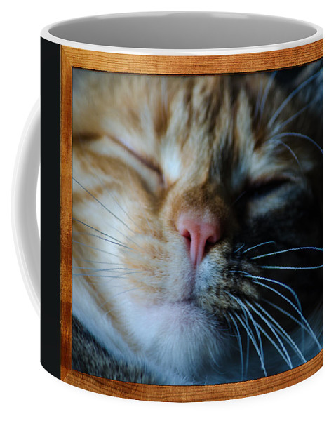 Cat Coffee Mug featuring the photograph Sleeping Abby Framed by Tikvah's Hope