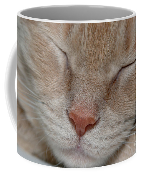 Animal Eyes Coffee Mug featuring the photograph Sleeping Cat Face Closeup by Amy Cicconi