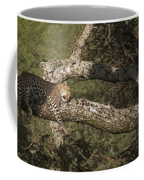 Leopard Coffee Mug featuring the photograph Sleeping Leopard by J L Woody Wooden
