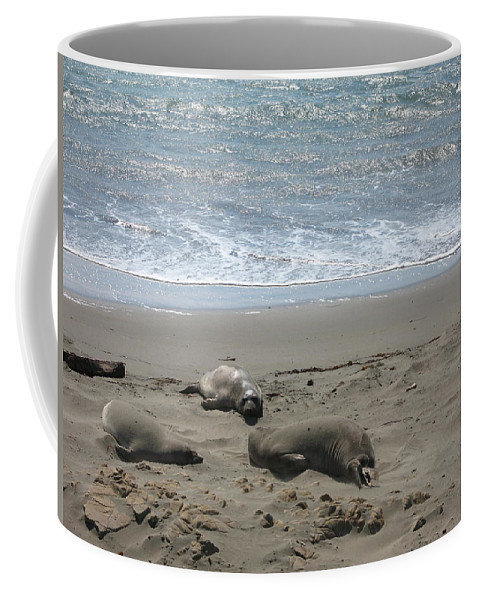 Seals Coffee Mug featuring the photograph Sleeping On The Beach by Christiane Schulze Art And Photography