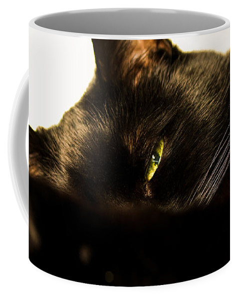 Animal Coffee Mug featuring the photograph Sleeping With One Eye Open by Bob Orsillo