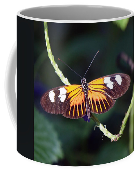 Butterfly Coffee Mug featuring the photograph Small Postman Butterfly by Jenny Hudson