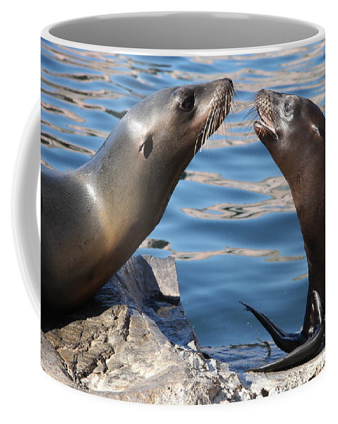 Seals Coffee Mug featuring the photograph Small Talk by Christiane Schulze Art And Photography