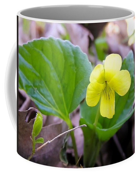 Small Yellow Violet Coffee Mug featuring the photograph Small Yellow Violet by Cynthia Woods