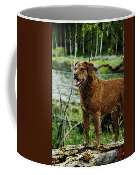 Dog Coffee Mug featuring the photograph Smile Now by Donna Blackhall