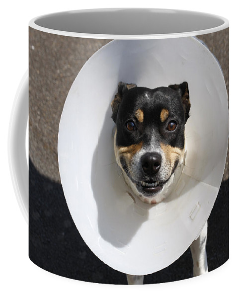 Small Coffee Mug featuring the photograph Smiling Dog by Steve Ball