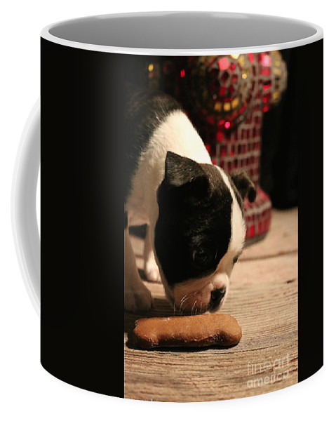 Animal.mammal Coffee Mug featuring the photograph Snack by Susan Herber