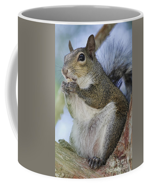 Squirrel Coffee Mug featuring the photograph Snack Time by Deborah Benoit