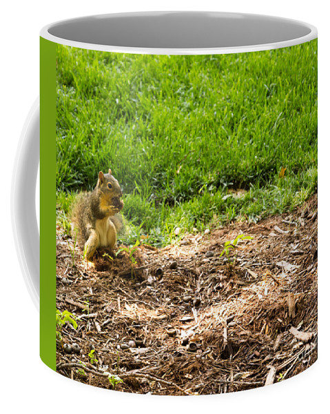 Squirrel Coffee Mug featuring the photograph Snack Time by Laura Deerwester