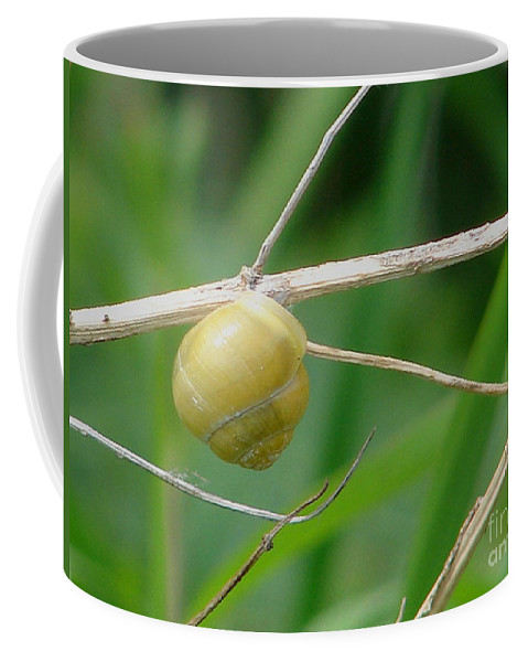 Snail Coffee Mug featuring the photograph Snail by Carol Lynch