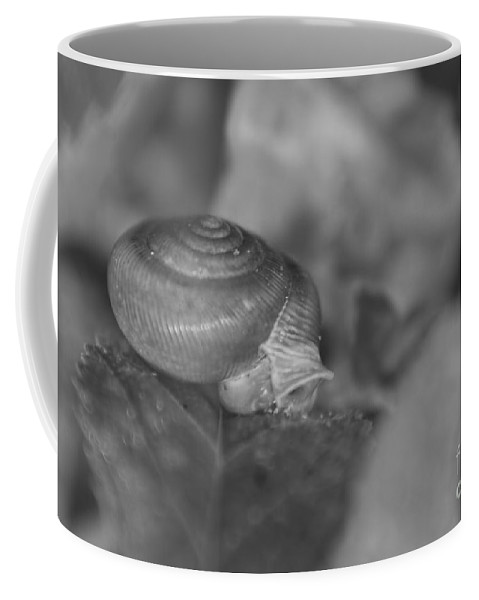 Snail Coffee Mug featuring the photograph Snail In Black And White by Olga Hamilton