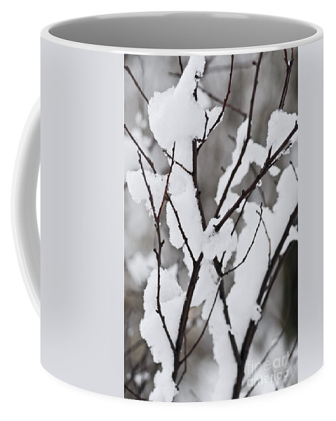 Winter Coffee Mug featuring the photograph Snow Covered Branches by Elena Elisseeva